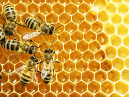Picture of beehive with five bees