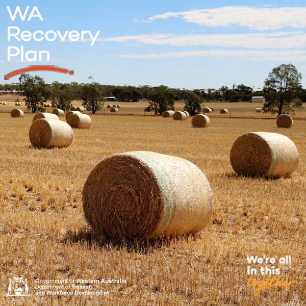 Wheatbelt Recovery Plan unveiled